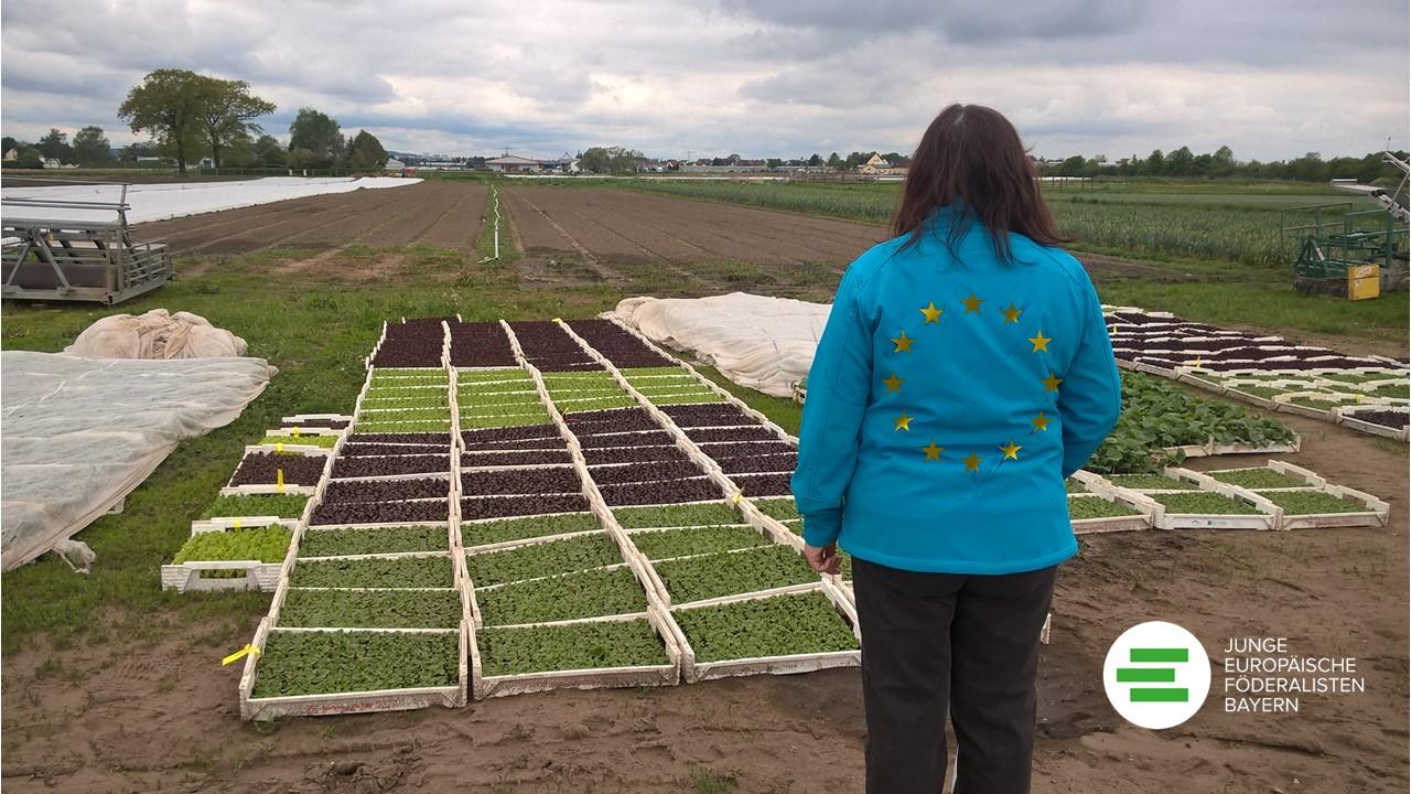 """""""Rettet die Bienen"""" – Gedankenfutter: Für eine Reform der Gemeinsamen Europäischen Agrarpolitik"""